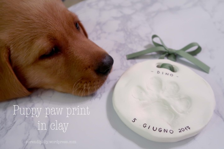 Puppy paw print in clay 🐾